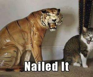 cat, funny, and tiger image