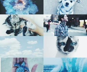 blue, cats, and hipster image