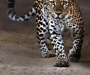 animal, amazing, and danger image