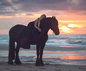 beach, horse, and black image