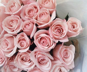 flower, roses, and pink image
