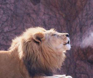 beautiful and lion image