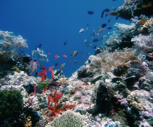 blue, colorful, and diving image