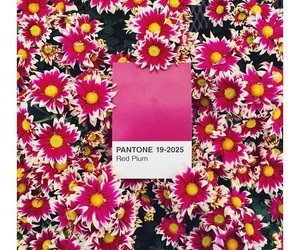 flowers, pantone, and aesthetic image