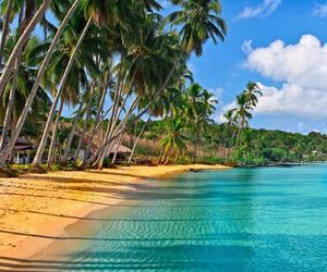beach, palm trees, and blue image