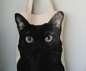 bag and cat image