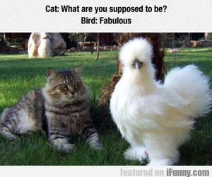 bird, cat, and Chicken image