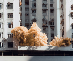 tree and city image