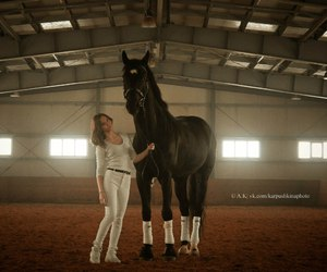 dressage and horse&girl image