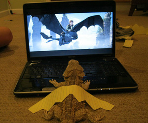 dragon, Dream, and funny image