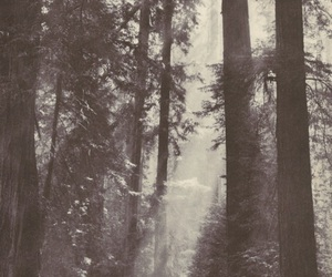 forest, photography, and black and white image
