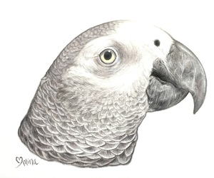 animal, animal art, and avian image