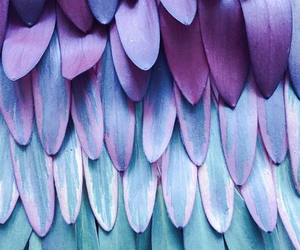 purple, blue, and feather image