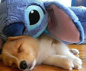 cute, dog, and stitch image