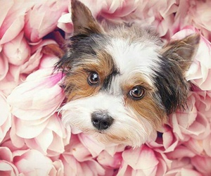 animals, dogs, and flowers image