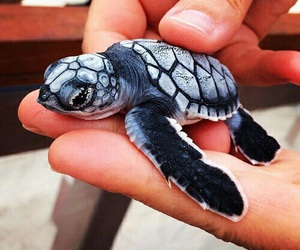 animal, turtle, and baby image