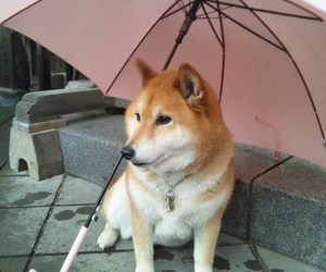 dog, animal, and umbrella image
