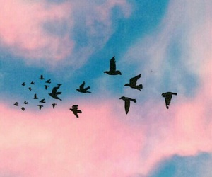 bird, sky, and wallpaper image