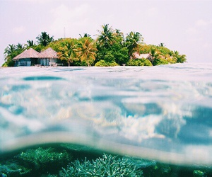 summer, ocean, and tropical image