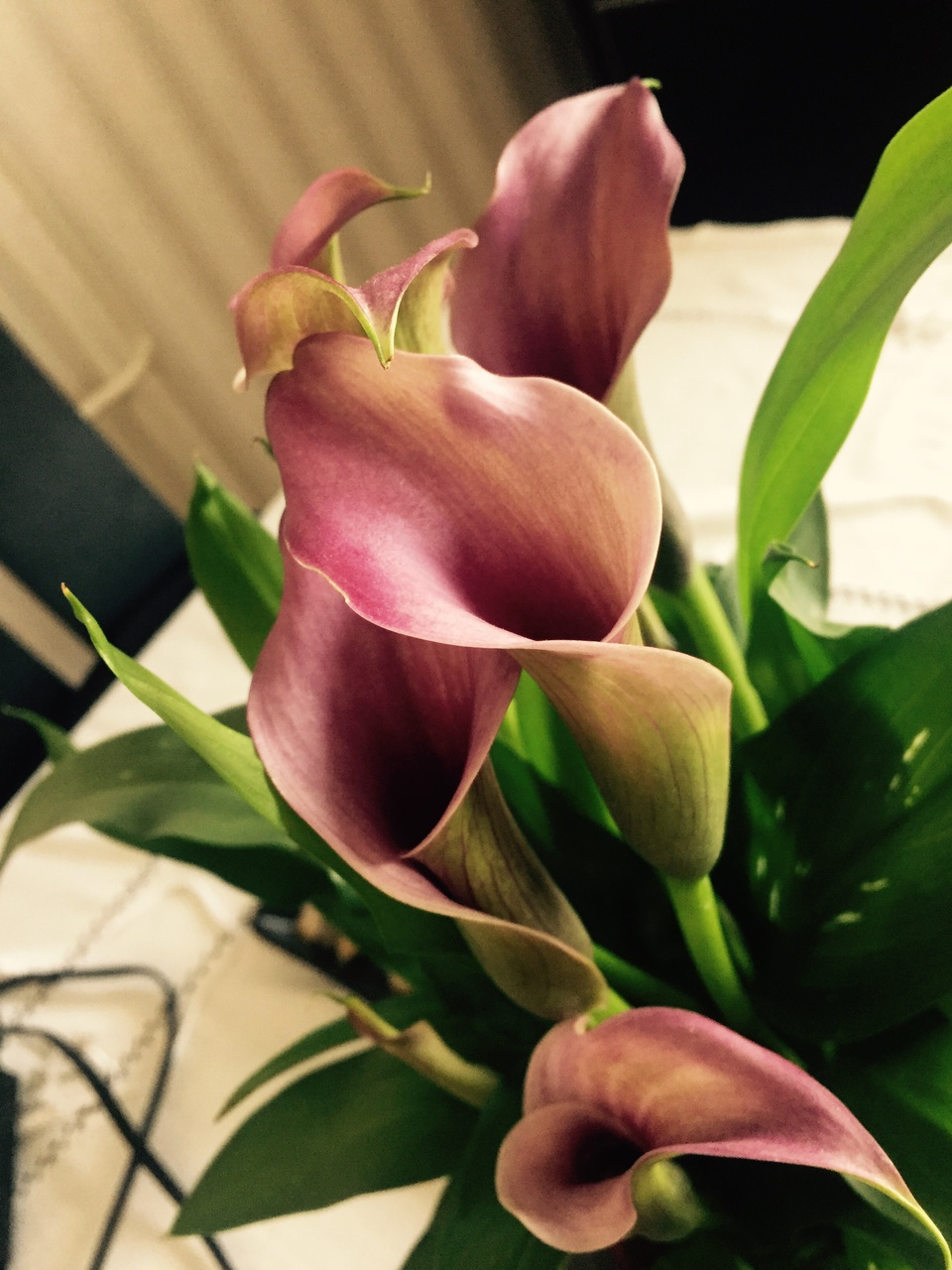 flower, calla lily, and lily image