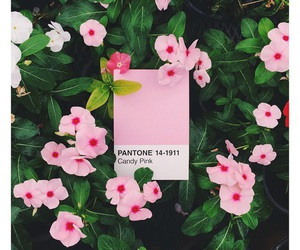 flowers, pantone, and pink image