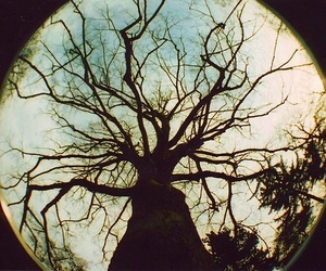 fotography, tree, and nature image