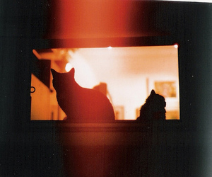 cat, kitty, and light leak image