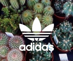 adidas, wallpaper, and cactus image