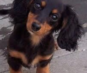 black, puppy, and cute image