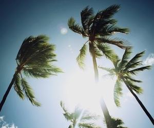 sun, palms, and sky image
