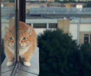 cat, animal, and mirror image