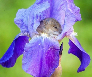 flowers, mouse, and animal image