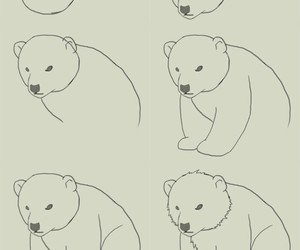 bear, draw, and drawing image