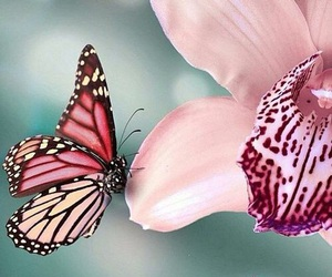 butterfly, flowers, and pink image