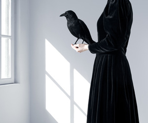 black, raven, and crow image
