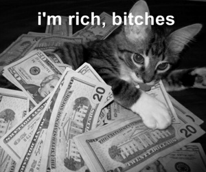cat, bitch, and rich image