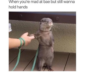 bae, lol, and meme image