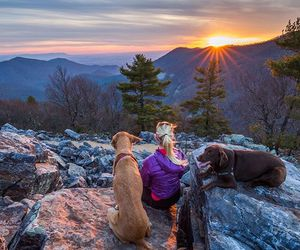 dogs and sunset image