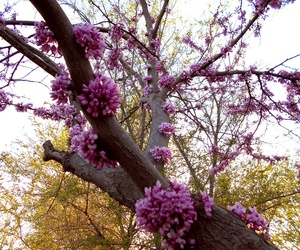 branches, spring, and ukraine image