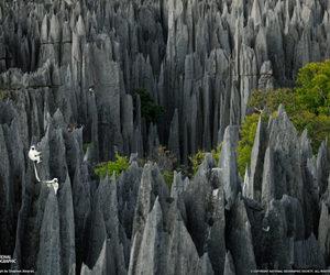 stone, madagascar, and lemurs image