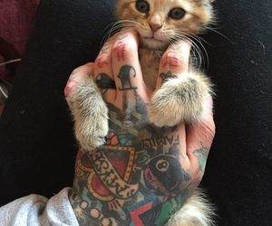 cat, tattoo, and man image