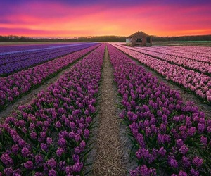 flowers, landscape, and nature image