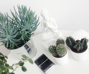 plants, white, and cactus image