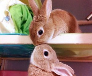 beautiful, bunny, and brown image