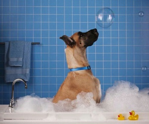 dog, bath, and cute image