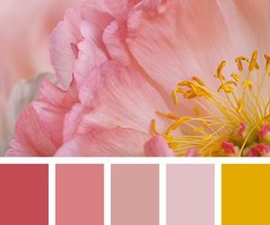 color palette, color scheme, and pink image
