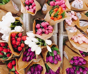 flowers, pretty, and tulips image