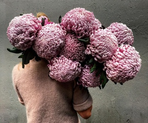 flowers, pink, and article image