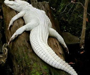 white, animal, and albino image