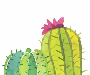 cacti, cactus, and indie image